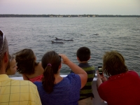 Sailing with the Dolphins